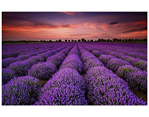1000 Piece Jigsaw Puzzle - Unique France Provence Lavender Field Summer Sunset Landscape for Kids Adult Teens Reduced Pressure Toy Gift Purple Romantic Lavender Art Wall Hanging