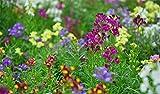 Fnho Raras Semillas de césped,Mezcla Semillas Ornamentales,Testamentos, Peces, balcón jardín flores-20 Grano_Color Mixto