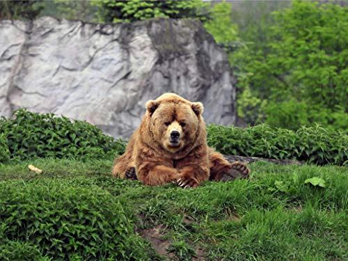 Woodmade Puzzel Bear voor volwassenen, vrije tijd, creatieve spelletjes, kunst, speelgoed, puzzels 1000 stuks