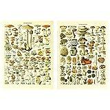 Meishe Art Poster Pilze Jahrgang Champignons