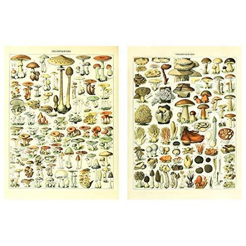 Meishe Art Poster Print Vintage Mushrooms Champignons Identification Reference Chart Diagram Illustration Botanical Educational Wall Decor