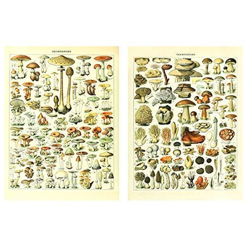 Meishe Art Poster Print Vintage Mushrooms Champignons Identification Reference Chart Diagram Illustration Botanical Educational Wall Decor