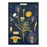 Cavallini & Co. Dandelion Chart Decorative Paper Sheet