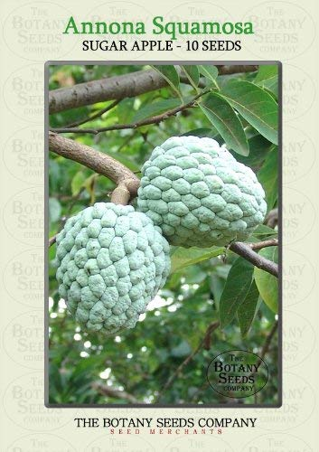 Annona Squamosa (10) Graines - Pommier Cannelle Semences [Sugar Apple]