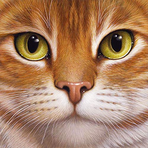 DIY 5D Diamond Painting Kits Full Drill Cute Kitty Cat Face Paint with Diamonds Embroidery by Numbers Cross Stitch Rhinestone Art Craft for Home Wall Decor 12x12 inch
