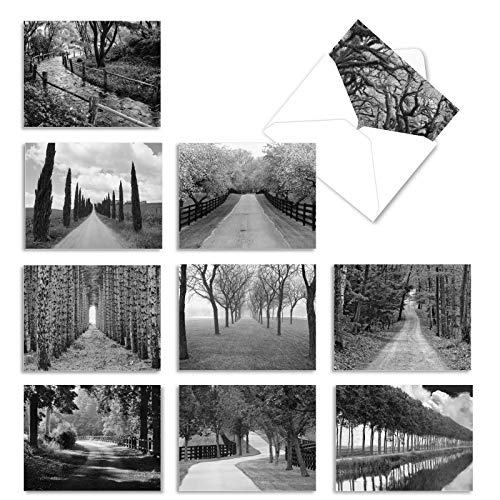 The Best Card Company - 10 Blank Note Cards with Envelopes (4 x 5.12 Inch) - Black & White Photos, Bulk Boxed Set - Tree Lines M3313