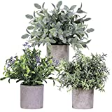 Winlyn 3 plantas artificiales de eucalipto en maceta, pequeñas plantas de granja, plantas artificiales para decoración de mesa, 22 cm de alto.