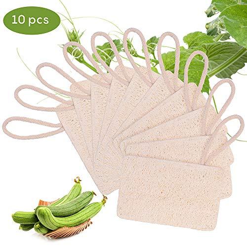 10 Stück Natur Luffa Schwämme, Luffa Schwammwäscher mit Kordel, Umweltfreundliches Abwaschen, Biologisch Abbaubar Reinigung Schwamm für Haushalt, Tiefe Reinigung für die Küche (Helle Farbe)