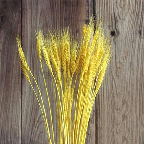 50 Stück Getrocknete Weizenohren Goldgelbes Pampasgras Künstliche Getrocknete Blumen Natürliche Grundfarben Natürliche Pflanzendekoration-Gelb
