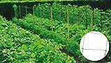 Riegolux 999156 Malla Entutorar 20 x 20 cm, Verde, 2 x...