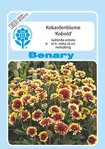 Kokardenblume Kobold mehrjährig Höhe 35 cm Samen