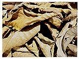 *Walnussblätter 20 Stück