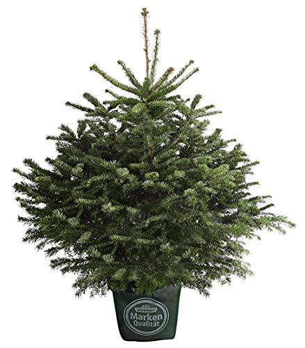 Dehner Nordmann-Tanne, im Topf gewachsen, harzig duftend, ca. 80-100 cm, 7.5 l Topf, Weihnachtsbaum