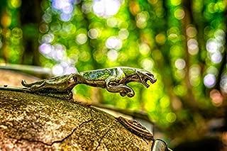 Photography Poster - Jaguar, Predator, Symbol, Oldtimer, 24