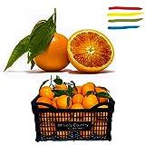 """Arance di Sicilia """"Tarocco"""" KG 16 - non trattate e non cerate - Buccia Edibile - ottime da Tavola o per preparare aranciata o marmellata artigianale di arance fresche genuina.(Calibro Misto)"""