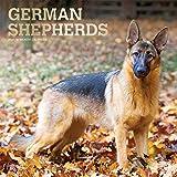 German Shepherds - Deutsche Schäferhunde 2021 - 16-Monatskalender mit freier DogDays-App: Original BrownTrout-Kalender [Mehrsprachig] [Kalender] (Wall-Kalender)