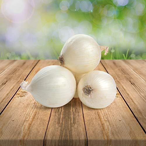 "weiße Zwiebel""Branca de Lisboa/weiße aus Lissabon"" 50 x Samen - alte Sorte Ernte 2020… (Zwiebel branca de lisboa)"