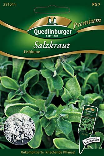 Salzkraut, Mesembryanthemum crystallinum, ca. 5-9 Samen