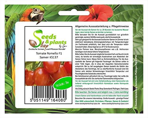 Stk - 3x Tomate Romello F1 Alte Sorten Samen Gemüse Saatgut KS137 - Seeds Plants Shop Samenbank Pfullingen Patrik Ipsa