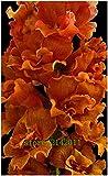 honic 100 pc/bag snapdragon, (anthirrhinum majus), bonsai snapdragon fiore, la crescita naturale per il giardino di casa: 6