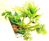 Completo 121,9cm acquario pianta 'naturali confezione