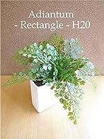 アジアンタム/Rectangle-長方形- H20 【造花】【CT触媒】