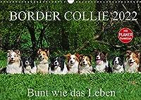 Border Collie 2022 (Wandkalender 2022 DIN A3 quer): Auf 13 wunderschoenen Fotos zeigt die Tierfotografin Sigrid Starick Border Collies in vielen Farben (Geburtstagskalender, 14 Seiten )