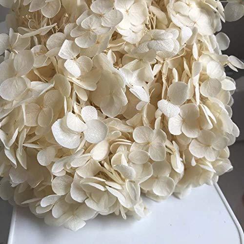 WILLBAN - Lote de flores frescas conservadas de alta calidad, flores de hortensia secas, cabeza de flor, para bricolaje, vida...