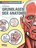 Manga-Zeichenstudio: Grundlagen der Anatomie: Geheimtipps der Profis - Kotarou Iwasaki