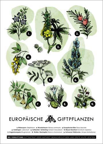 Poster 21 x 30 cm: Europäische Giftpflanzen von Velozee - hochwertiger Kunstdruck, neues Kunstposter
