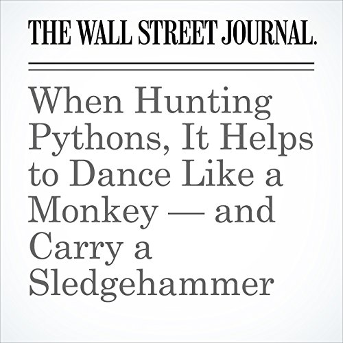 When Hunting Pythons, It Helps to Dance Like a Monkey — and Carry a Sledgehammer copertina