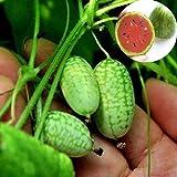 Leaftree Mini-graines de pastèque, Mini-Pouce Graines de pastèque Jus de Fruit sucré Graines de Fruits comestibles sans OGM Graines de Plantes de Jardin (10 Paquets)