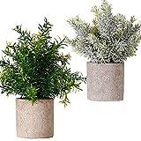 FagusHome Plantas Artificiales en macetas 2 Piezas Mini Plantas de eucalipto Artificiales en macetas Plantas Artificiales de plástico Verde Falso en macetas para decoración de Interiores (C)