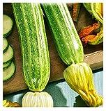 semi di zucchino romanesco - verdure - cucurbita pepo - 60 sementi approssimativamente - i migliori semi di piante - fiori - frutti rare - zucchine romanesche - idea regalo originale