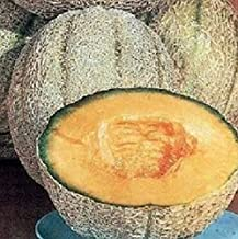 Cantaloupe Seeds Planters Jumbo Melon Fruits Seeds 200 Pcs an
