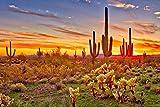 Colorful Sunset with Saguaro Cactus Sonoran Desert Arizona Photo Photograph Cool Wall Decor Art Print Poster 36x24