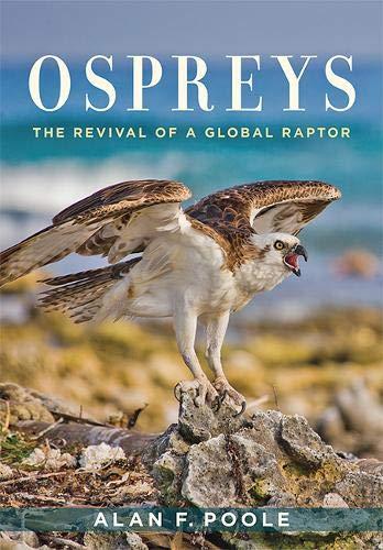 Ospreys: The Revival of a Global Raptor