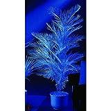 artplants.de Set 'Howea forsteriana de plástico + Spray de protección UV' - Palma Kentia Decorativa Trudy, en Vara de fijación, Blanco UV, 90cm