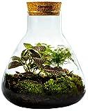 Growing Concepts DIY Ecosistema sostenible Erlenmeyer con Corcho Mediano - Mezcla botánica - H26xØ22cm
