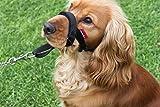 Champion - Cavezza imbottita per cane - accessorio per addestrare il cane a non tirare