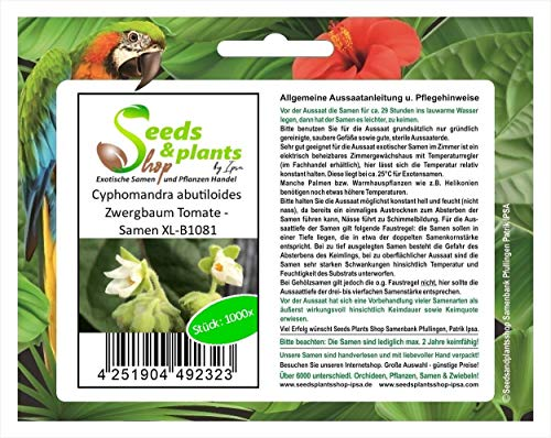 Stk - 1000x Cyphomandra Abutiloides Zwergbaum Tomate - Semillas XL-B1081 - Seeds Plants Shop Samenbank Pfullingen Patrik Ipsa