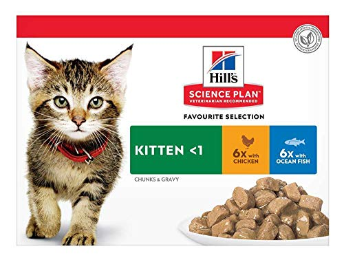Hill's SP - Kitten - Favourite Selection 12 x 85 g (+ Gratis Behälter)
