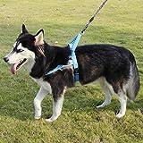 Lampop Imbracatura per Cane Pettorina Riflettente 3M Nylon Impermeabile Durevole Regolabile per Cani di Taglia Piccola Media Grande