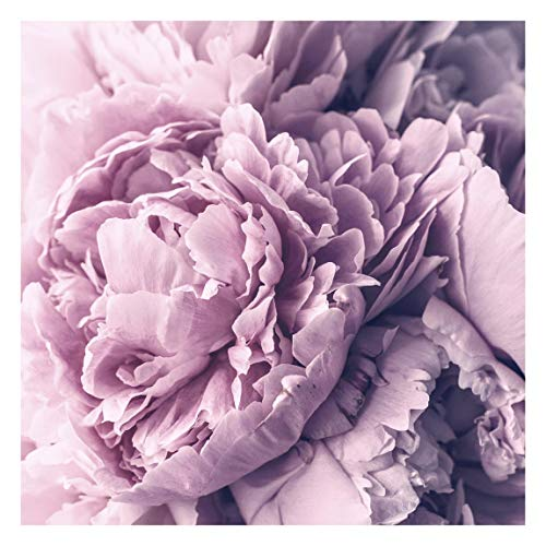 Tapete selbstklebend - Lila Pfingstrosenblüten Fototapete, 240cm x 240cm