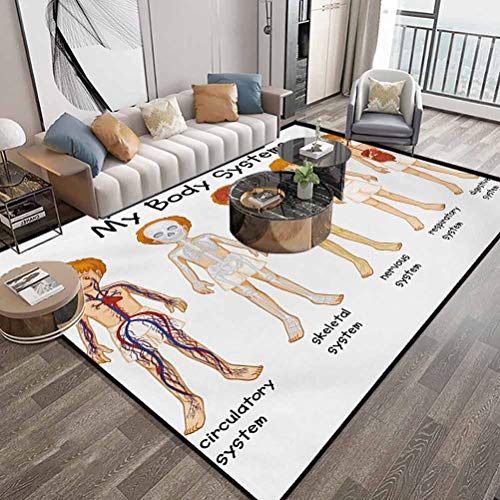Educational Area Rug 4X6 Feet,Different Systems in Human Nervous Skeletal Digestive Body Anatomy Young Kids,Indoor Comfortable Modern Rugs Carpet with Lock-Edge & Non-Slip Base,Multicolor