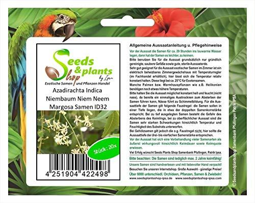 Stk - 20x Azadirachta Indica Niembaum Niem Neem Margosa Pflanzen - Samen ID32 - Seeds Plants Shop Samenbank Pfullingen Patrik Ipsa