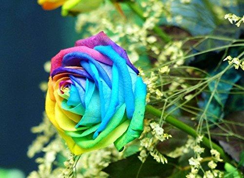 Pots de fleurs jardinières, 10 sortes de 100 graines, Rainbow Rose semences belle rose semences Bonsai plantes Semences pour la maison et le jardin