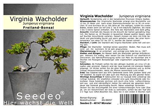 Seedeo® Virginia Wacholder (Juniperus virginiana) 25 Samen