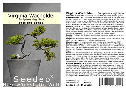 Seedeo® Virginia Wacholder (Juniperus virginiana) 25 Samen
