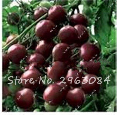 100 Pcs Rare Graines de tomate arc-en-ornement Pot graines de variétés anciennes de légumes bio alimentaires herbe pour les graines bonsaï plantes jardin 7
